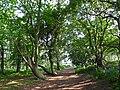 Woodland path, Arne - geograph.org.uk - 1442301.jpg