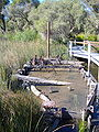 Yanchep National Park 2.jpg