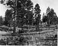 Yarding Logs - 1903 (5376157362).jpg