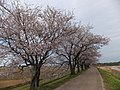 Yatsuomachi Nishijinzu, Toyama, Toyama Prefecture 939-2311, Japan - panoramio (13).jpg