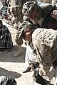 Zabul Para-vets lead Afghans to livestock success DVIDS819062.jpg