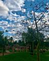Zarqtouni garden, Sidi Bennour3.png