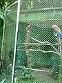 Zoo Dois Irmãos by SandraSB (5).jpg