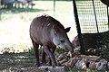Zoo de la Barben 20100605 049.jpg