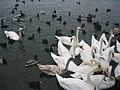 Zurich2007 img 5975.jpg