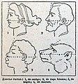"""Ángulo facial"". (5404401786).jpg"