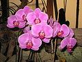 """""""Orchid 3"""".JPG"""