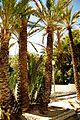 ® ┼ M.D. EL CAMPELLO VILLA MARCO EXTERIOR - panoramio (2).jpg