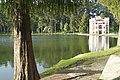Árbol en el Castillo Gillow.JPG