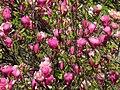 Ботанічний сад ім. І.Фоміна IMG 8311.jpg