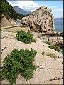 Брела - panoramio (9).jpg