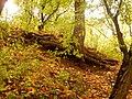 Вінничина, Муровані Курилівці парк Жван 17.jpg