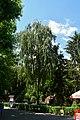 Дендрарій Київського зоопарку DSC 0206.jpg