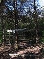 Дендрологічний парк, Довгинцівський район 18.JPG
