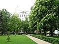 Кольцовский сквер. Цветут каштаны - panoramio.jpg