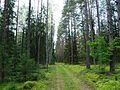 Лесная дорога meža ceļš - panoramio - Aleksandrs Timofejev… (3).jpg