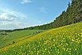 Лучка - Краєвид поблизу села - 14056569.jpg