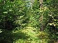 Маленькая тропинка в лесу - panoramio.jpg