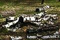 Непран Вячеслав, Білоусова Садка, Заповідне урочище, 44-216-5006, Кремінський район, Серебрянське лісництво (4).jpg