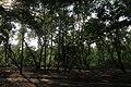 Парк «Нивки» (східна частина) IMG 3279.jpg