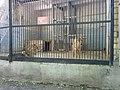 Тварини в зоопарку Миколаїв.jpg