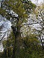 Украина, Киев - Голосеевский лес 74.jpg