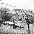 כפר שמריהו-ZKlugerPhotos-00132hf-907170685124371.jpg