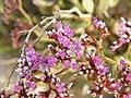 زهور فى قلب الصحراء - panoramio - youssef alam.jpg