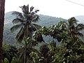 ചിറ്റാരിക്കാലിന്റെ പ്രകൃതി ഭംഗി 01.jpg