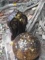 ใบเสมา วัดบางกุ้ง Bai Sema of Wat Bangkoong.jpg