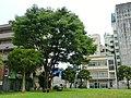 千葉栄町の空き地 - panoramio (2).jpg