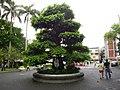 圓環裡的老榕樹 - panoramio.jpg