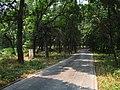 孔林 - Cemetery of Confucius - 2015.06 - panoramio.jpg