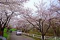 戸田記念墓地公園 (Toda commemoration graveyard park) - panoramio (8).jpg