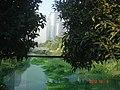 杭州. 钱江新城(远景:杭州电信大楼) - panoramio.jpg