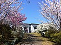 櫻2 - panoramio.jpg