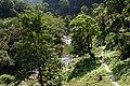 金瓜寮溪觀魚蕨類步道 Jingualiao Creek Fish WatchIng and Fern Trail - panoramio.jpg