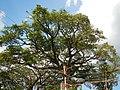 0345jfSibul BiaknaBato National Park Road Madlum River Bridge San Miguel Bulacanfvf 08.JPG
