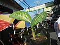 0546La Suerte lucky plant in the Philippines 05.jpg