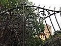 086 Casa Barbey, tanca del Passeig (la Garriga).JPG
