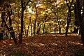 131103 Hokkaido University Botanical Gardens Sapporo Hokkaido Japan09bs.jpg