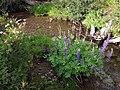 170808-FS-Tahoe-LupineAndSpirea (36435718271).jpg
