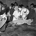 18.05.76 à l'école vétérinaire de Toulouse, opération d'un brocard jeune cerf (1976) - 53Fi886.jpg