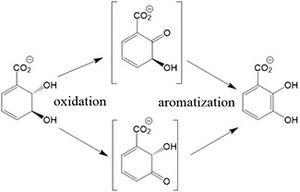 2,3-dihydro-2,3-dihydroxybenzoate dehydrogenase - Reaction scheme for 2,3-diDHB dehydrogenase.