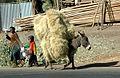 2004 Addis Ethiopia 5858450.jpg