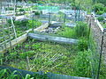 2007 community garden Boston 516674869.jpg