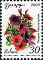 2008. Stamp of Belarus 11-2008-06-10-petuniya.jpg