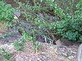 2008 0516Schmiehbach0062.JPG