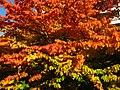 2011-10-31-160309 .JPG - panoramio.jpg