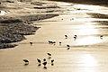 2012-01-15 18-34-01 Spain Canarias Jandía.jpg